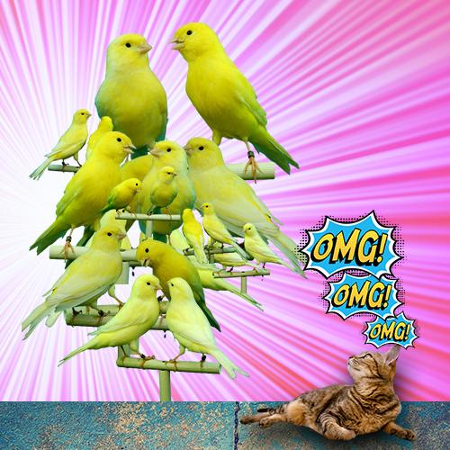 Februllage dag 17 Canaries